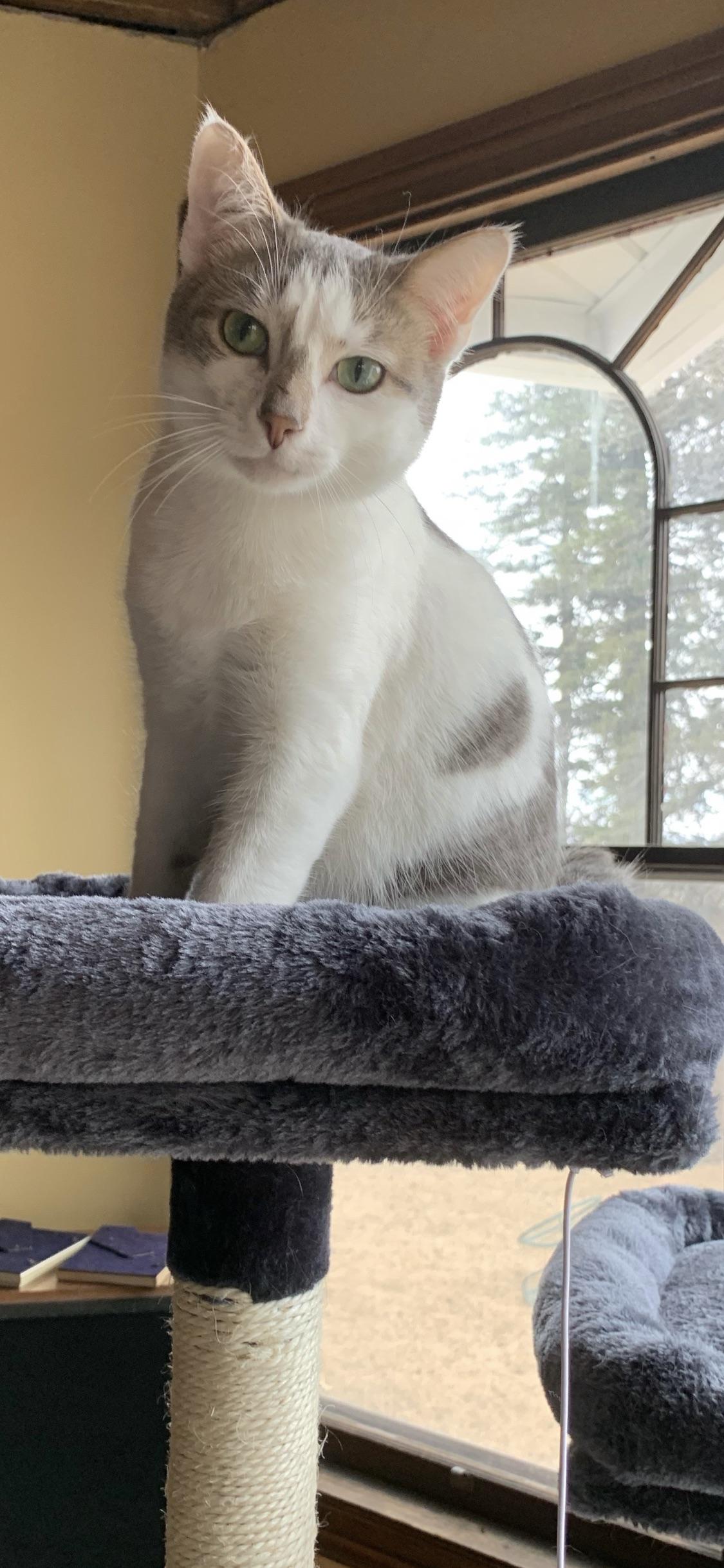Peepmycat